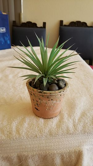 7 Inch Tall Faux Cactus Plant in Pot G. Wolff & Co Read Below for Sale in Upland, CA