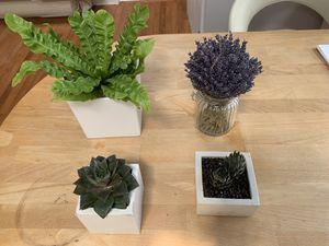 Succulents/lavender/fern for Sale in Boston, MA