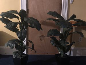 Two fake plants decoratively anywhere in your home! for Sale in Beverly, MA