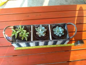 New Basket With Out Succulents for Sale in El Cajon, CA