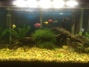 """20"""" GL FISH TANK $150.00 for Sale in Houston, TX"""