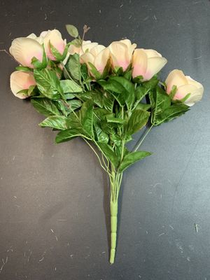 19 Light pink rose bushes for Sale in Nashville, TN