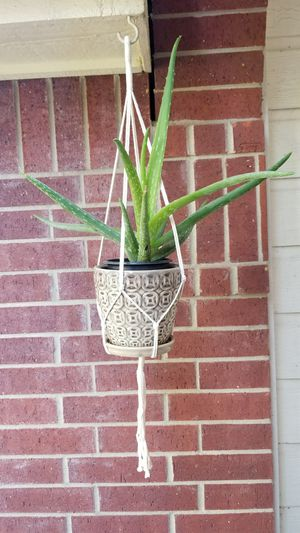Macrame plant hanger for Sale in Katy, TX