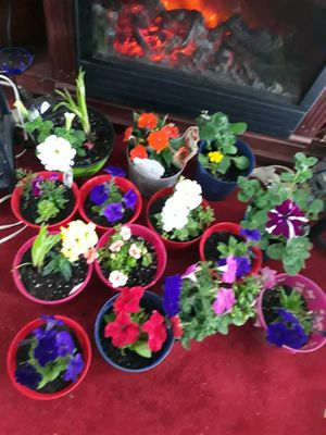 Potted outdoor Flowers $5 Beautiful for Sale in Chesapeake, VA