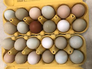 Large eggs for sale $4 doz for Sale in Port Orchard, WA