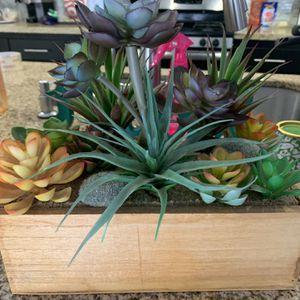 Succulents for Sale in Camarillo, CA