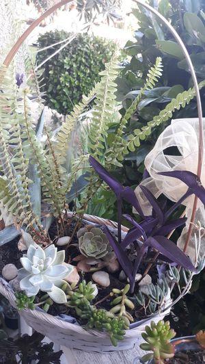 Maceta de elechos y succulents. for Sale in Reedley, CA