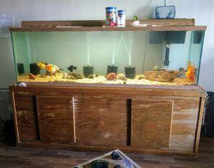 125 gallon aqarium for Sale in Phoenix, AZ