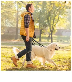 Stretch Free Flexible Leash Dogs with Bungee Cord, Great Shock-Absorbing Ability, Much Comfortable to Dog and People. Nylon Webbing with Bouble Refle for Sale in Corona, CA