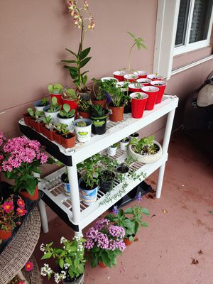 ORGANIC PLANTS & VEGETABLES & MORE for Sale in Fort Lauderdale, FL