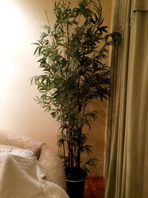 Artificial Bamboo plant for Sale in Schaumburg, IL