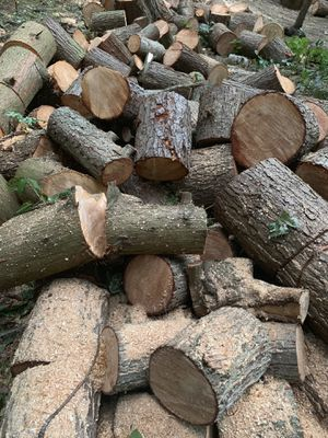 """Firewood 16-18"""" rounds for Sale in Edmonds, WA"""