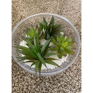 Decorative Succulents for Sale in Cranberry Township, PA