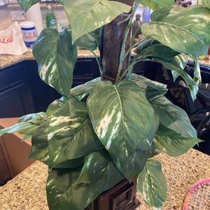 Fake House Plant for Sale in League City, TX
