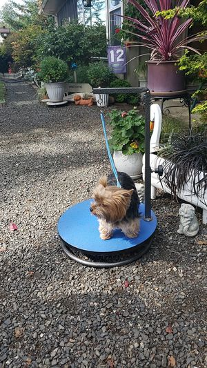Grooming table for small dogs for Sale in Aberdeen, WA