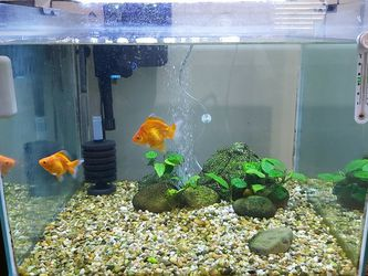 40 Gallon Cube Fish Tank Aquarium Goldfish for Sale in Burbank,  CA