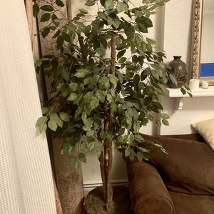Fake Plant! 6' for Sale in Aurora, CO