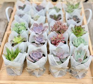 Succulent party favors, baby shower, wedding favor for Sale in San Jose, CA