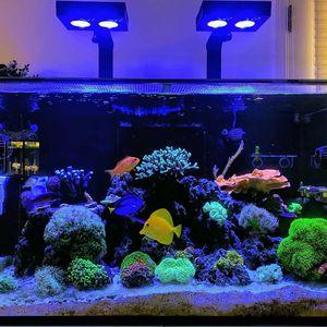 Red Sea Reefer 250 Reef Tank Aquarium Full Setup for Sale in Oakland, CA
