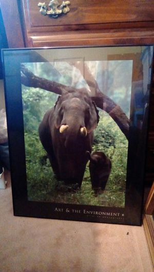 Animal pictures! for Sale in Vinton, VA