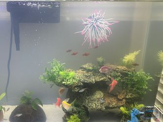 Aqueon Aquarium Kit 29 Gallon for Sale in Ramona,  CA