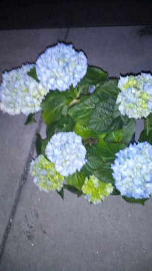 Flowers flowers flowers for Sale in Waterbury, CT
