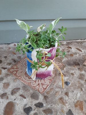 Glacier pothos and succulents for Sale in Hurst, TX