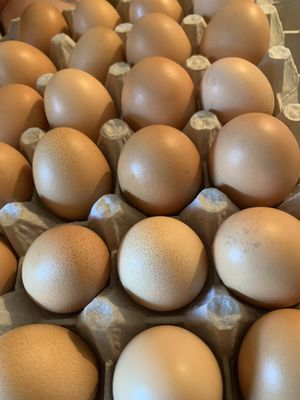 Fresh Eggs for Sale in Tracy, CA
