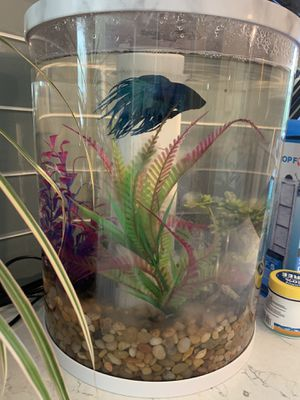 Beta fish with tank and accessories for Sale in Virginia Beach, VA