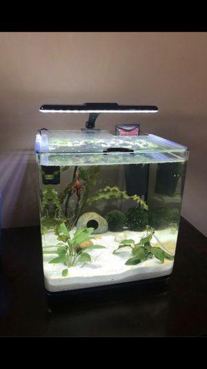 4 gallon aquarium for Sale in Rialto, CA