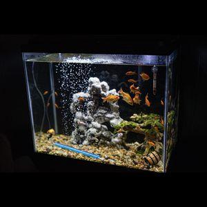 20 Gallon Fish Tank for Sale in Watsonville, CA