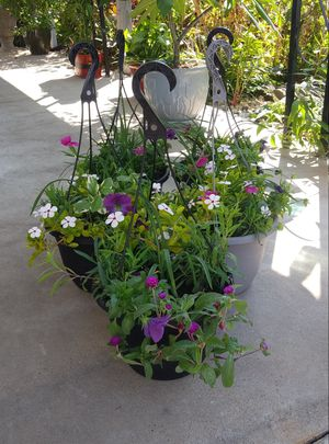 Mix flowers in large hanging pots$13 each pot for Sale in St. Louis, MO