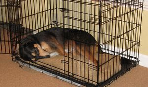 Large dog crate with divider for Sale in Hillsborough, NC