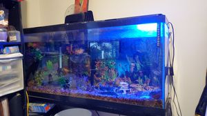 55 gallon fish aquarium for Sale in Sudley Springs, VA