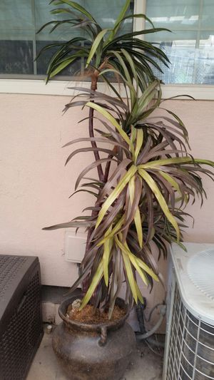 Plastic plant for Sale in Valley Home, CA