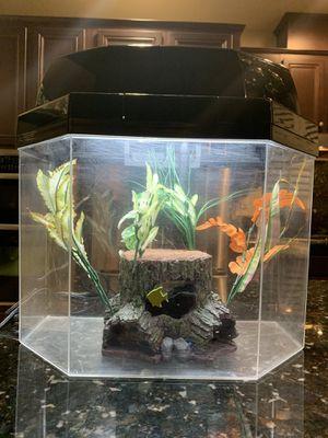 5 Gallon Fish Tank Kit for Sale in Chula Vista, CA