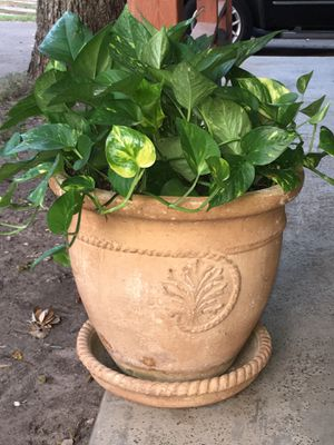 Pot with plant in a excellent condition for Sale in Irving, TX