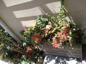 Entire Succlent garden for Sale in Houston, TX