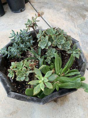 Succulent arrangement for Sale in Spring Valley, CA