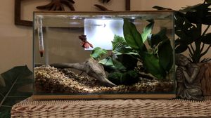 Glass Aquarium with Plants for Sale in Everett, WA