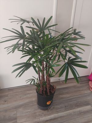 House plant for Sale in Hayward, CA