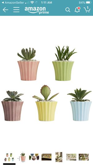 Cupcake Succulent Pots (set of 5) ** Dozens Available for Sale in Winter Garden, FL