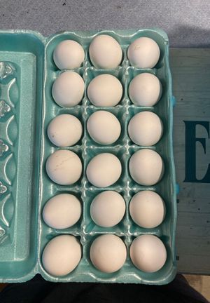 Free-Range farm eggs for Sale in Melbourne, FL