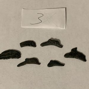 Ancient Greece Coins Lot Of 6 Olbia Dolphin 5th Century BC Bronze (3) for Sale in Modesto, CA