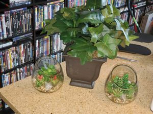 Home or office Decor Fake Plant, Glass plants and rocks for Sale in New York, NY