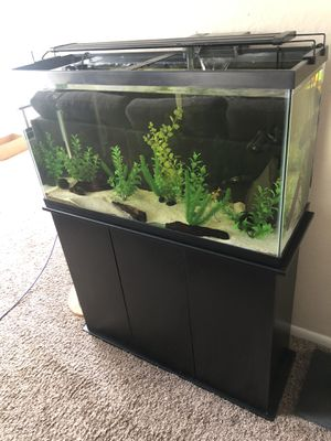 Aquarium (All-Inclusive) for Sale in Altamonte Springs, FL