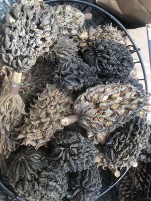 "Magnolia Cones, Pine Cones, Two 18"" Straw Wreathes for Sale in Washington, DC"