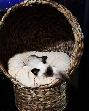 Wicker cat bed! for Sale in Beaverton, OR