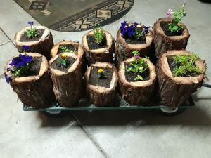 Flower pots (special) each for Sale in Fresno, CA