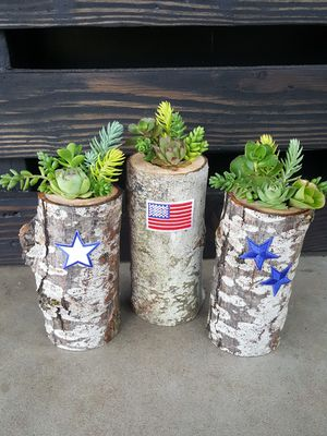 Independence Day Living Succulent Arrangements for Sale in Hillsboro, OR